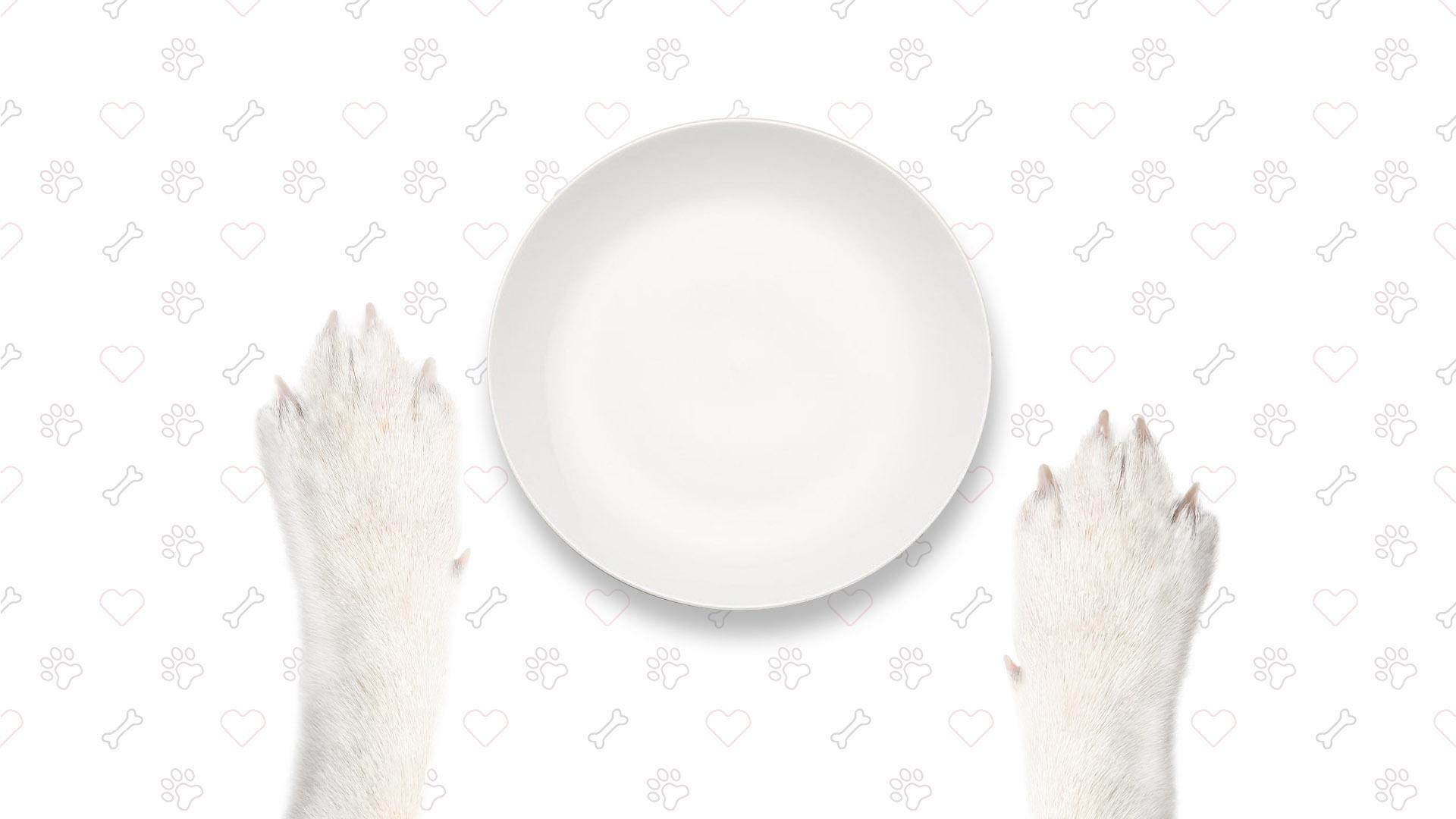 Hungry Wolf Codex